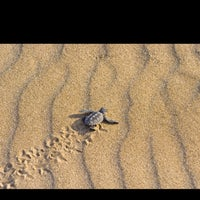 Photo taken at İztuzu Beach by Adem A. on 8/17/2013