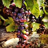 Photo taken at Benziger Family Winery by David L. on 8/10/2013