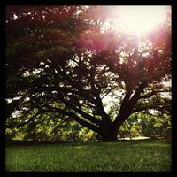 รูปภาพถ่ายที่ Vachirabenjatas Park (Rot Fai Park) โดย Navaploy K. เมื่อ 4/27/2013