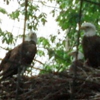 Photo taken at Bald Eagle Exhibit by Barbie R. on 5/26/2013