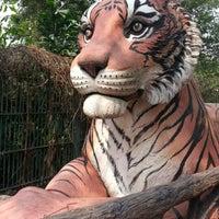 Photo taken at Dusit Zoo by Jeerinun C. on 1/30/2013