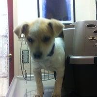 Photo taken at Lakeline Animal Clinic by AustinPixels on 12/27/2012
