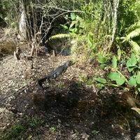 Photo taken at Bird Rookery Swamp by Matthias R. on 12/23/2013