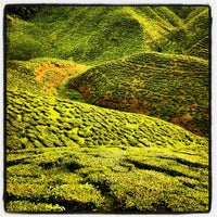 Photo taken at Cameron Bharat Tea Valley by Shah ク. on 12/22/2012
