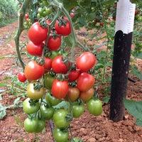 Photo taken at uysallar tarım kayaburnu modern sera tesisleri-2 by Murat U. on 12/8/2014
