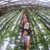 Photo taken at KHM Strawberry Farm by Faiz Z. on 5/15/2016