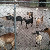 Photo taken at CJ Goat Farm by Lauren C. on 10/8/2012