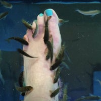 Fish spa iceland spa for Fish pedicure los angeles