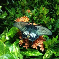 Photo taken at The Butterfly Conservatory at the American Museum of Natural History by Yours Truly, E. on 10/3/2012