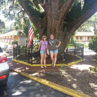 Photo taken at The Old Senator Tree by Kelsey G. on 8/19/2013