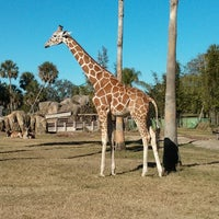 Photo taken at Busch Gardens Tampa by Dan P. on 12/27/2012