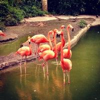 Photo taken at Zoo Miami by carolina on 7/5/2012