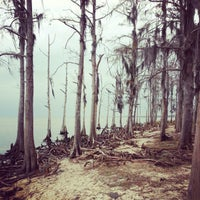 Photo taken at Fontainebleau State Park by Cindy Z. on 12/31/2012