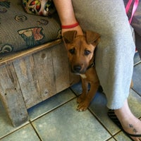 Photo taken at Van Zandt Animal Care Center by Lisa M. on 11/14/2012