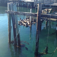 Photo taken at Sea Lion Observatory Deck by Rhonda B. on 12/1/2013