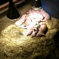 Photo taken at Kinderboerderij Molenwei by Ragnhild D. on 1/13/2012