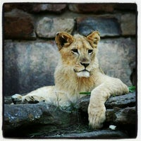 Photo taken at Fort Worth Zoo by Maurena B. on 5/8/2012