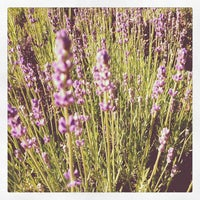 Photo taken at Bay Lavender Trading Company by Abby A. on 6/15/2012
