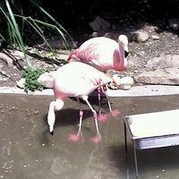 Photo taken at Akron Zoo by Lauren T. on 7/29/2012