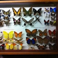 Photo taken at The Butterfly Conservatory at the American Museum of Natural History by Lisa S. on 1/21/2012