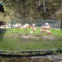 Photo taken at 旭山動物園 ととりの村 by Butasomjin 赤. on 5/10/2012