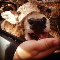 Photo taken at Zoo Safari by Jacqueline G. on 6/5/2012