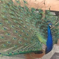 Photo taken at ABQ BioPark Zoo by Casey on 4/28/2012