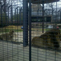 Photo taken at George H. Carroll Lion Habitat by Cameron K. on 1/10/2012