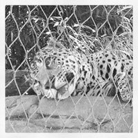 Photo taken at Sacramento Zoo by Todd D. on 7/22/2012