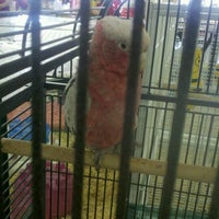 Photo taken at Pet Supermarket by Johnny C. on 1/25/2012