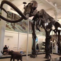 Photo taken at David H. Koch Dinosaur Wing by Christa E. on 7/23/2012