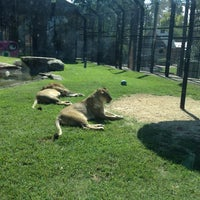 Photo taken at George H. Carroll Lion Habitat by Bethany P. on 8/20/2012