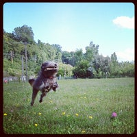 Photo taken at Burlington Waterfront Dog Park by Alison on 8/12/2012