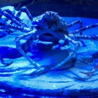 Photo taken at Sea Life Aquarium by Paul O. on 9/8/2011