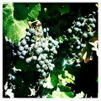 Photo taken at Silverado Vineyards by Darrin K. on 8/23/2011
