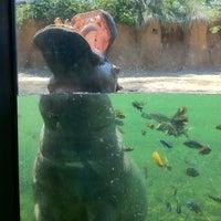 Photo taken at San Antonio Zoo by Jonathan G. on 6/12/2011