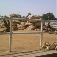 Photo taken at Doha Zoo by Diana A. on 2/20/2012