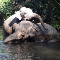 Photo taken at Jungle Cruise by Susan P. on 2/29/2012