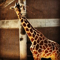 Photo taken at Reid Park Zoo by Kelsey F. on 2/29/2012