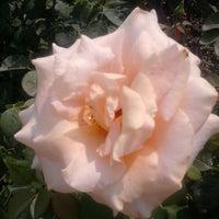 Photo taken at Julia Davis Rose Garden by Kimmie P. on 8/14/2012