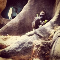 Photo taken at World of Primates at Ft. Worth Zoo by Blair H. on 4/28/2012