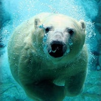 Photo taken at Toledo Zoo by Madelynn G. on 12/24/2011
