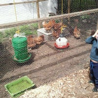 Photo taken at Hattie Carthan Community Garden by Whitney M. on 7/10/2011