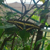 Photo taken at Gamboa Orchid & Butterfly garden by Ray L. on 1/15/2012