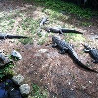 Photo taken at Okefenokee Swamp Park by Jennifer N. on 3/12/2012