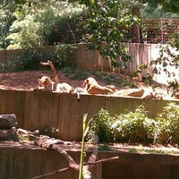 Photo taken at Great Cats at The National Zoo by Jen B on 5/31/2012