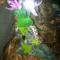Photo taken at LLL Reptile by Megan M. on 4/5/2012