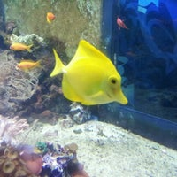Photo taken at Sealife Centre by Fabrizio O. on 7/8/2012