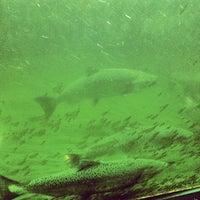 Photo taken at Hiram M. Chittenden Locks by Stephanie C. on 8/23/2012