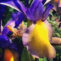 Photo taken at Bellevue Sobriety Garden by Laura H. on 4/25/2012